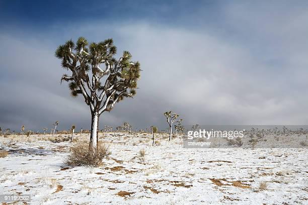 Snow in Mojave Desert