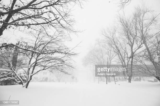snow in west hartford, connecticut iii - bare tree stock pictures, royalty-free photos & images