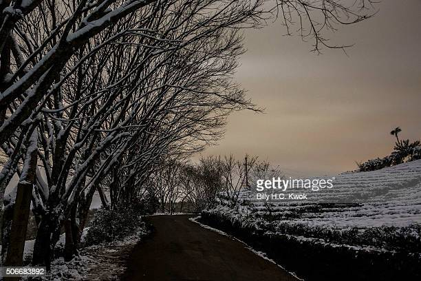 Snow is seen in Pinglin during a snowfall in Taiwan on January 25 2016 in New Taipei City Taiwan Local media reported at least 85 people died mostly...