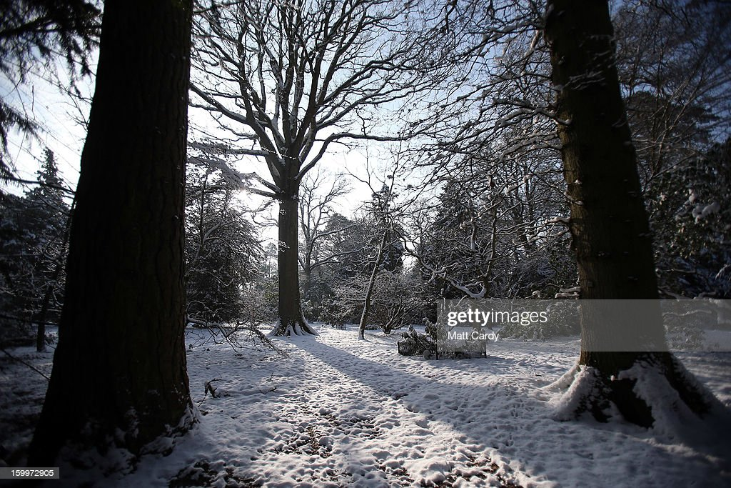Snow is seen on trees as the sun shines at Westonbirt Aboretum on January 24, 2013 near Tetbury, England. According to forecasters the UK is set to experience a thaw from the winter weather with rain, higher temperatures and high winds arriving from the South West tomorrow.