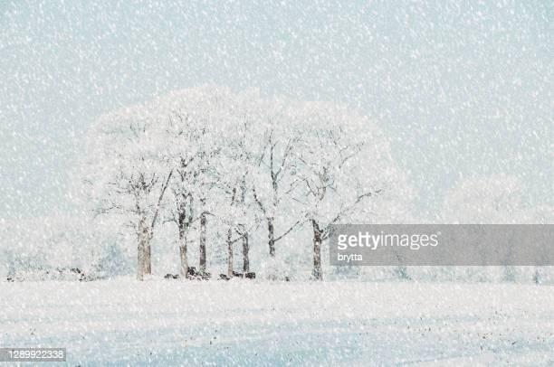 het landschap van de sneeuw met berijpte bomen - diepe sneeuw stockfoto's en -beelden