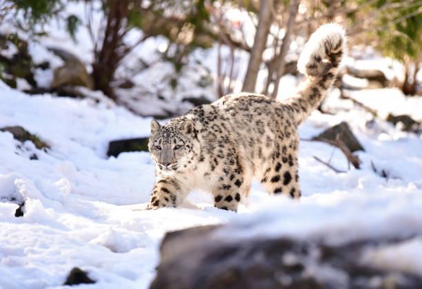 animals at the bronx zooの写真およびイメージ ゲッティイメージズ