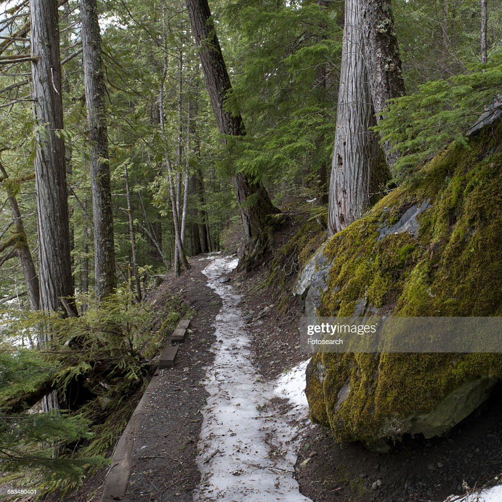 Snow melting from a trail : Stock Photo