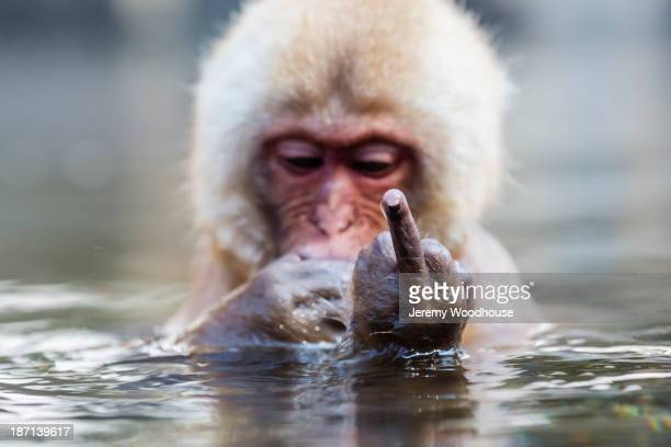 snow monkey bathing in hot spring - funny animals stock pictures, royalty-free photos & images