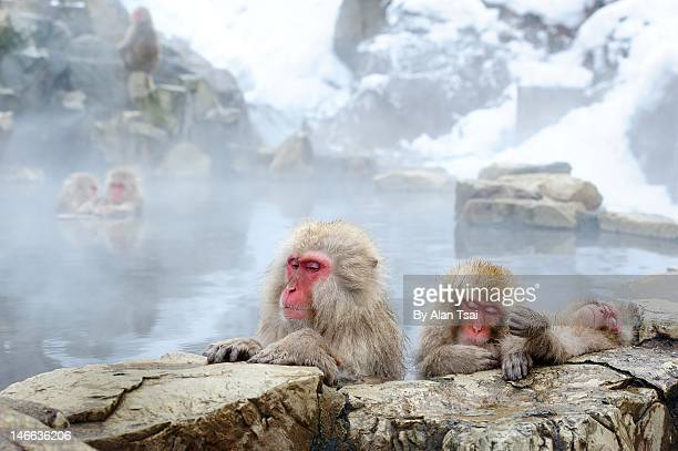 snow monkey - hot spring stock pictures, royalty-free photos & images