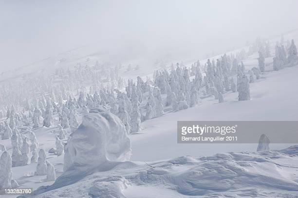 Snow monsters piercing through mist in Zao