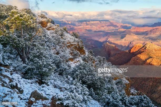 snow morning at grand canyon - don smith stock-fotos und bilder