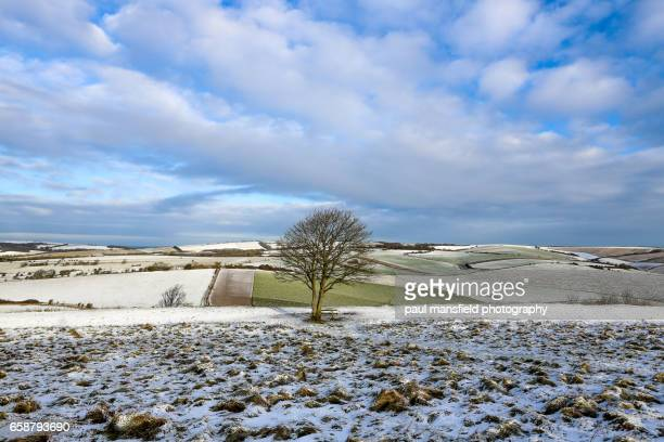 Snow on South Downs