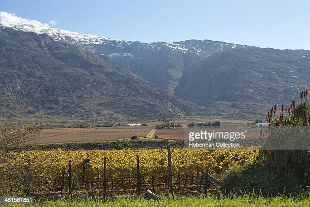Snow On The Matroosberg Mountains With Vineyards In The Hex River Valley