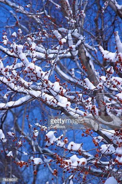 snow on tree branches - wasserform stock-fotos und bilder