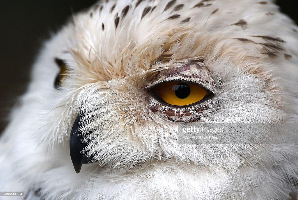GERMANY-ANIMALS-ZOO : News Photo