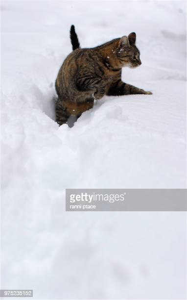 snow - bialowieza forest stock pictures, royalty-free photos & images