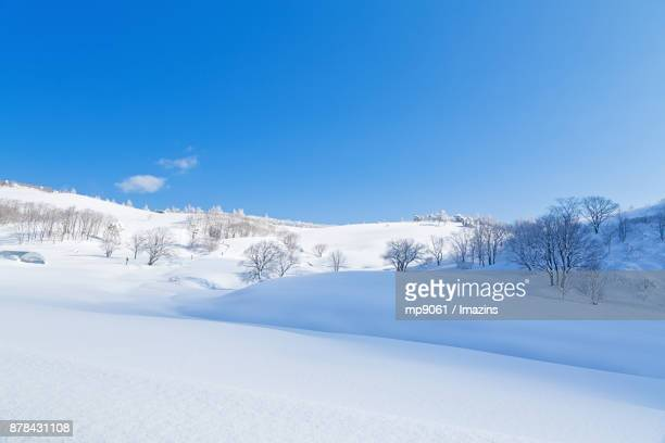 Snow scene of mountain path, Daegwallyeong (famous travel destination) in Gangwon Province