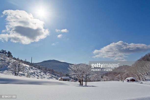 Snow scene of remote house in Daegwallyeong (famous travel destination), Gangwon Province