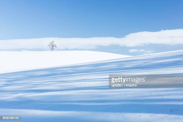 snow scene of tree on a hill - 深い雪 ストックフォトと画像
