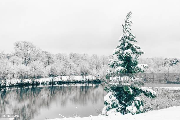 snow scene - southern christmas stock pictures, royalty-free photos & images