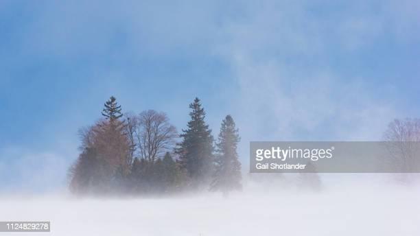 Snow Squall around the Tree Clump