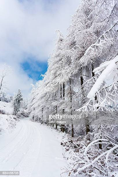 snow view - eastern white pine stock pictures, royalty-free photos & images