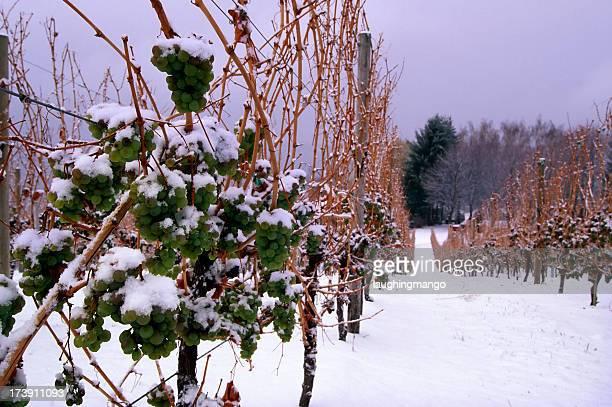 snow vineyard ice wine okanagan valley scenic