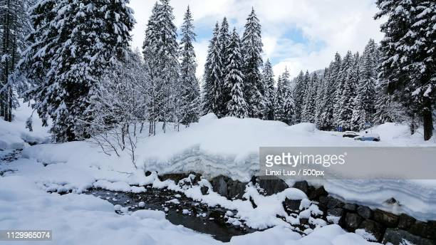 snow wald - wald stock pictures, royalty-free photos & images
