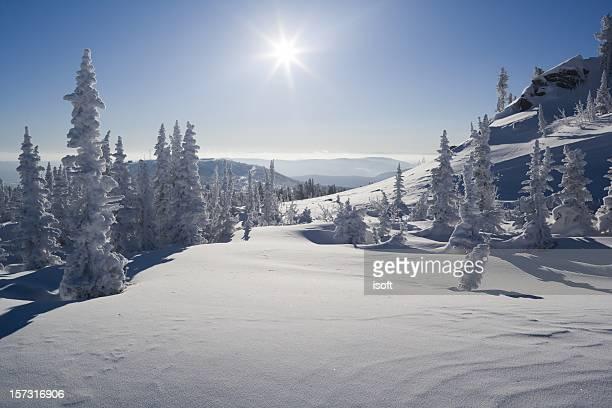 Snow. Winterpark.  Sheregesh. Cedar.