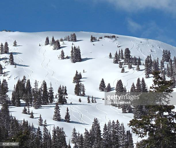 Snowboard tracks on the continental divide