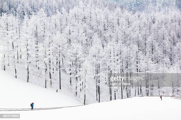 Snowcapped Forest and Photographer in Pyeongchang