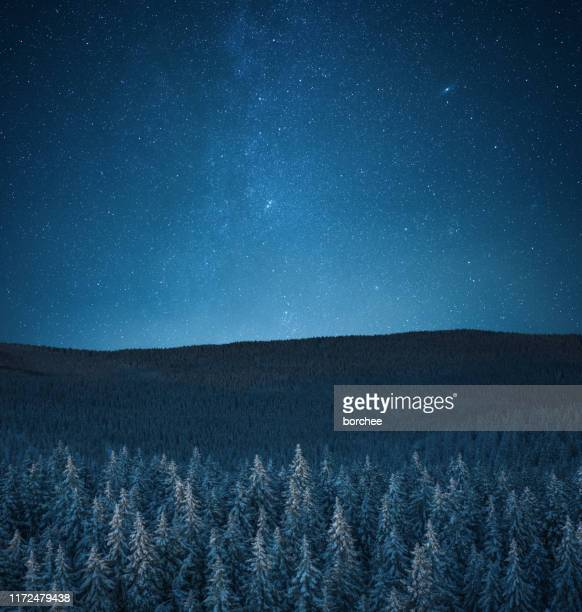 snowcapped forest under the stars - dreamlike stock pictures, royalty-free photos & images