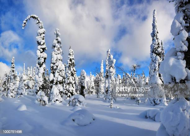 Snowcapped giants and blue sky