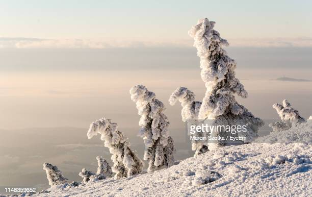 snowcapped mountain against sky during winter - babia góra mountain stock pictures, royalty-free photos & images