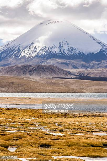 snowcapped parinacota volcano with lake chungara on the foreground - altiplano stock pictures, royalty-free photos & images