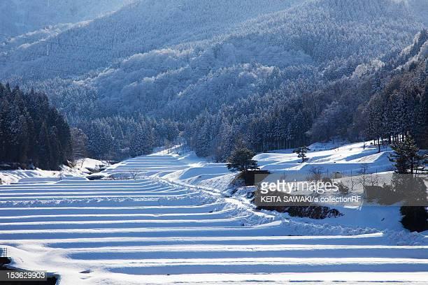 snowcapped rice field - hokuriku region stock photos and pictures