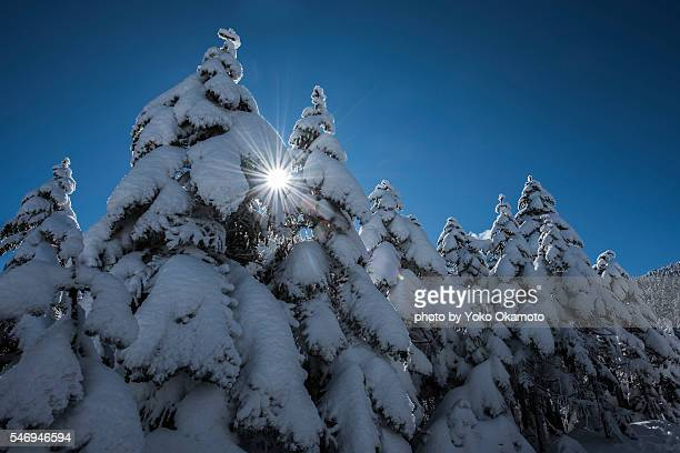 Snow-capped trees and blue sky and a shaft of light Sunshine in Kitayatugatake