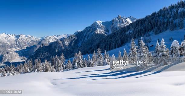 schneebedeckte bäume und pulverschnee im skigebiet - kemter stock-fotos und bilder