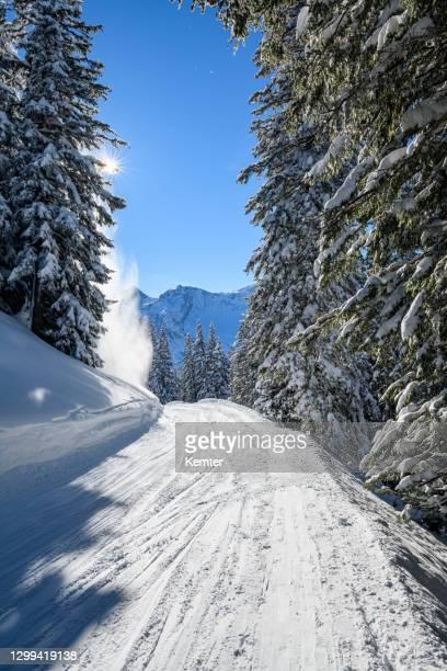 schneebedeckte bäume im skigebiet - kemter stock-fotos und bilder