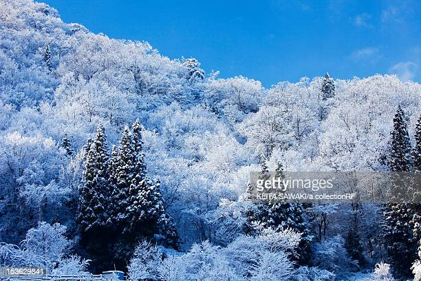 snowcapped trees - fukui prefecture - fotografias e filmes do acervo