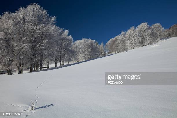 Snowcovered at San Valentino Brentonico plateau Trentino Italy Europe