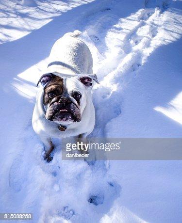 Snowcovered Denver Colorado Usa Stock Photo - Getty Images