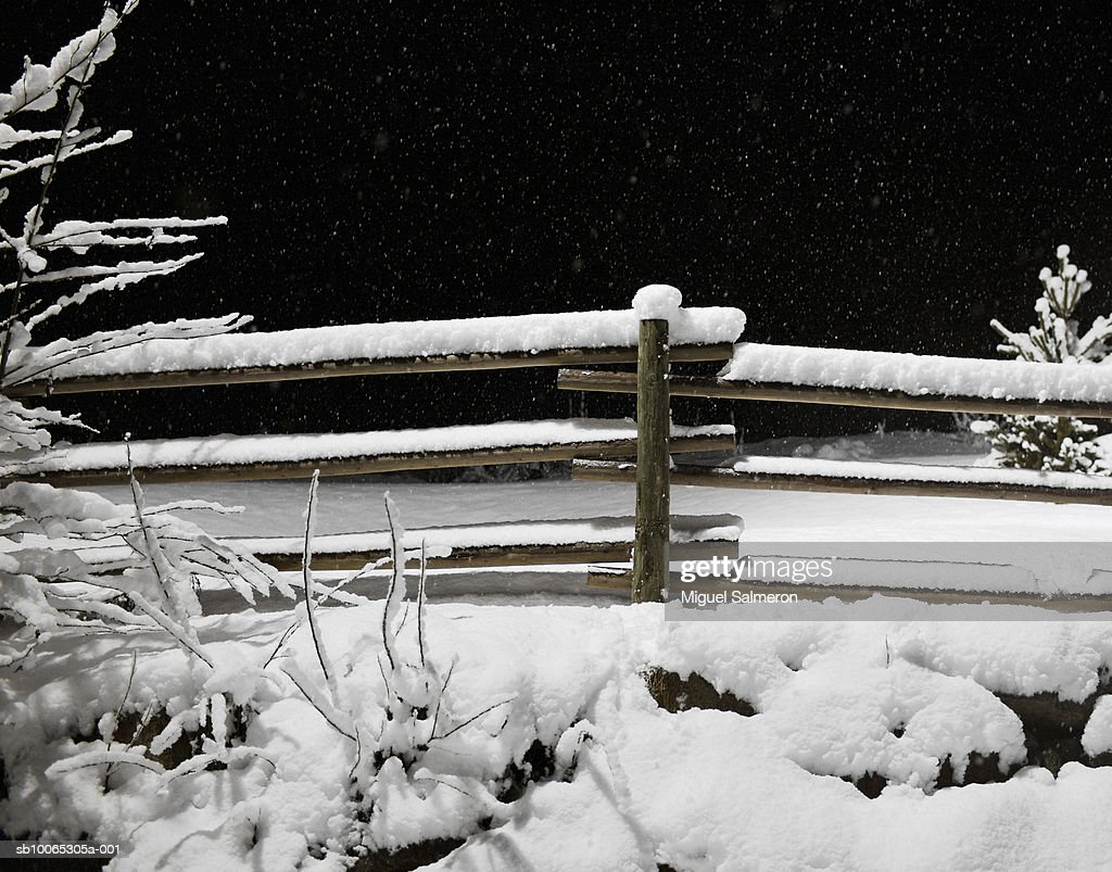Snow-covered fence and bushes, night : Foto stock