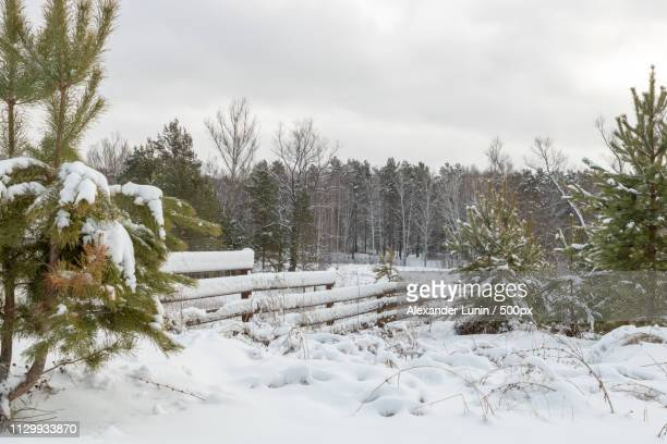 snow-covered fence - lunin stock photos and pictures