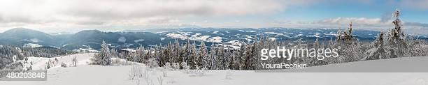 Abeto bajo nieve