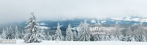 Abeto bajo nieve, XXXXL VISTA PANORÁMICA