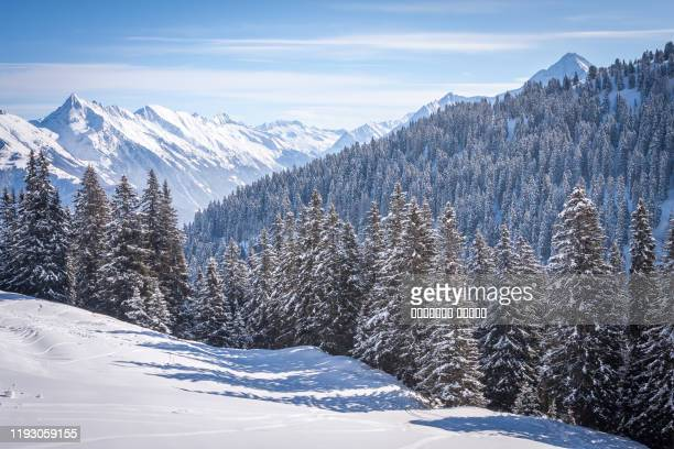 snow-covered firs against the background of the alps in the ski resort - winter stock pictures, royalty-free photos & images
