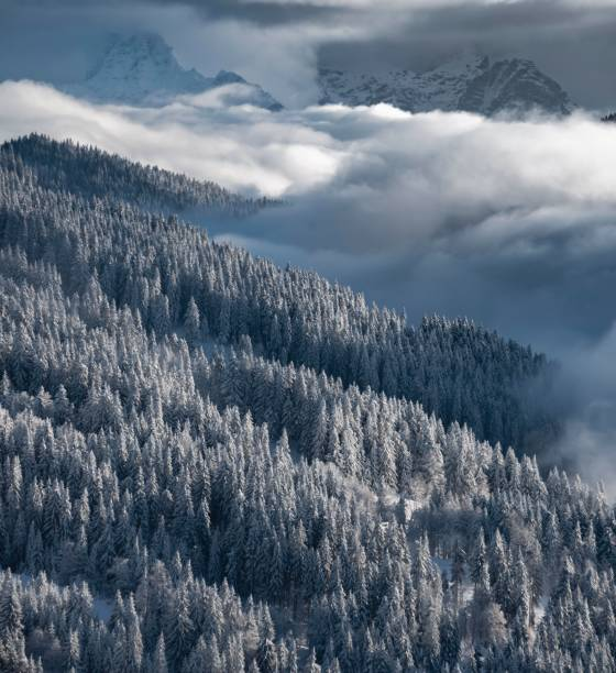 Snow-covered forest and mountains between clouds, high fog, Hochbrixen, Brixen im Thale, Tyrol, Austria