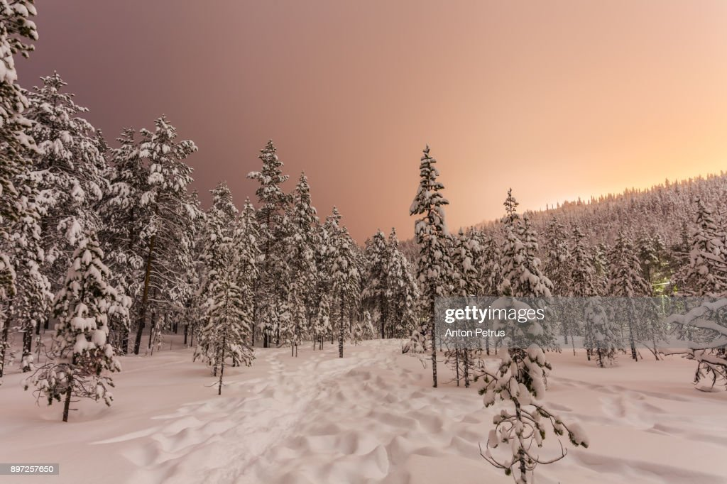 Snow-covered forest at night in Finland : Stock-Foto