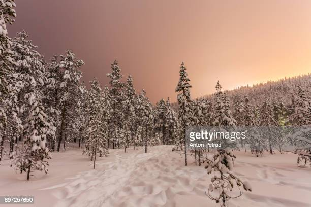snow-covered forest at night in finland - februar stock-fotos und bilder