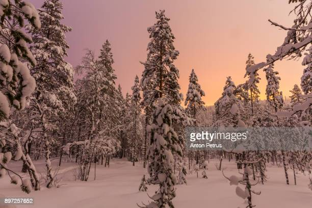 Snow-covered forest at night in Finland