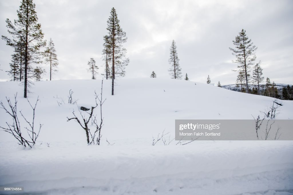 A Snow-Covered Forest in Rural Norway, Wintertime : Stock-Foto