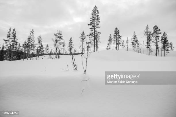 A Snow-Covered Forest in Rural Norway, Wintertime
