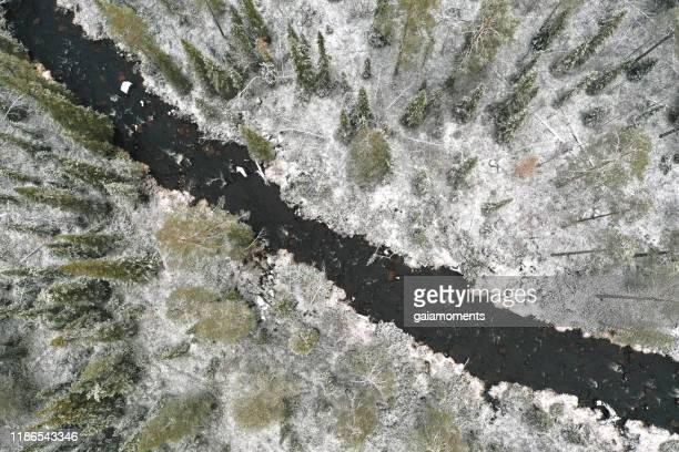 snow-covered forest with river in lapland - tundra stock pictures, royalty-free photos & images